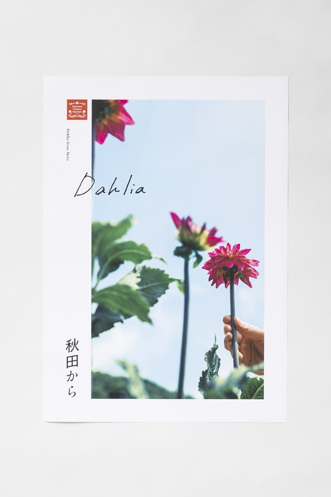 "AFM TODAY'S FLOWER ""Dahlia"" Other Image"